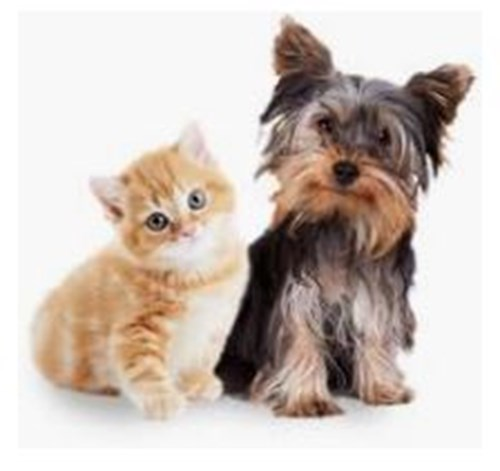 Renew your Cat or Dog Registration - Pay Online